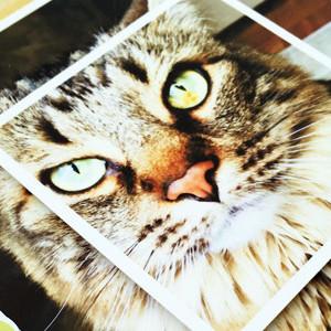 Kitten Smitten Layout